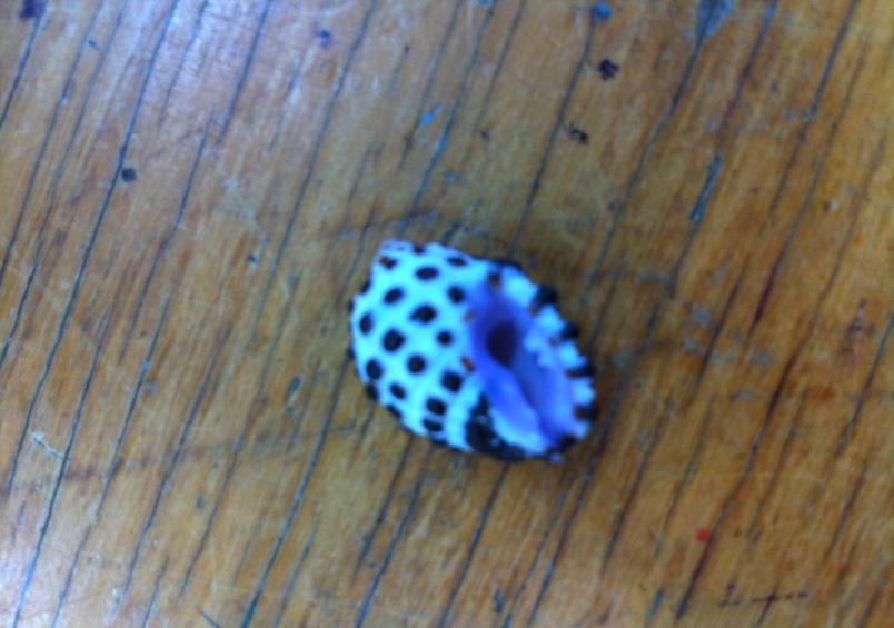 shell Daniel